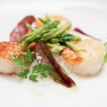 THE SCALLOPS